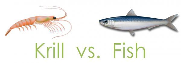 Krill oil vs for Krill oil versus fish oil